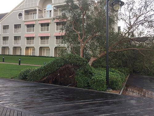 Disney world hurricane Irma debris