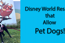 Disney World Resorts that Allow Dogs
