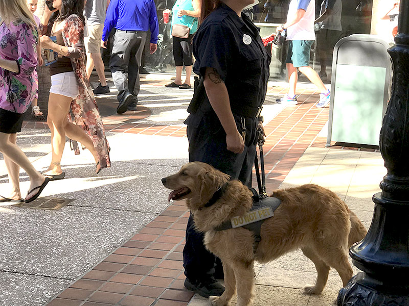 SECURITY WITH DOG AT DISNEY SPRINGS