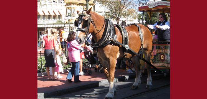 Main Street Vehicles in Disney World's Magic Kingdom
