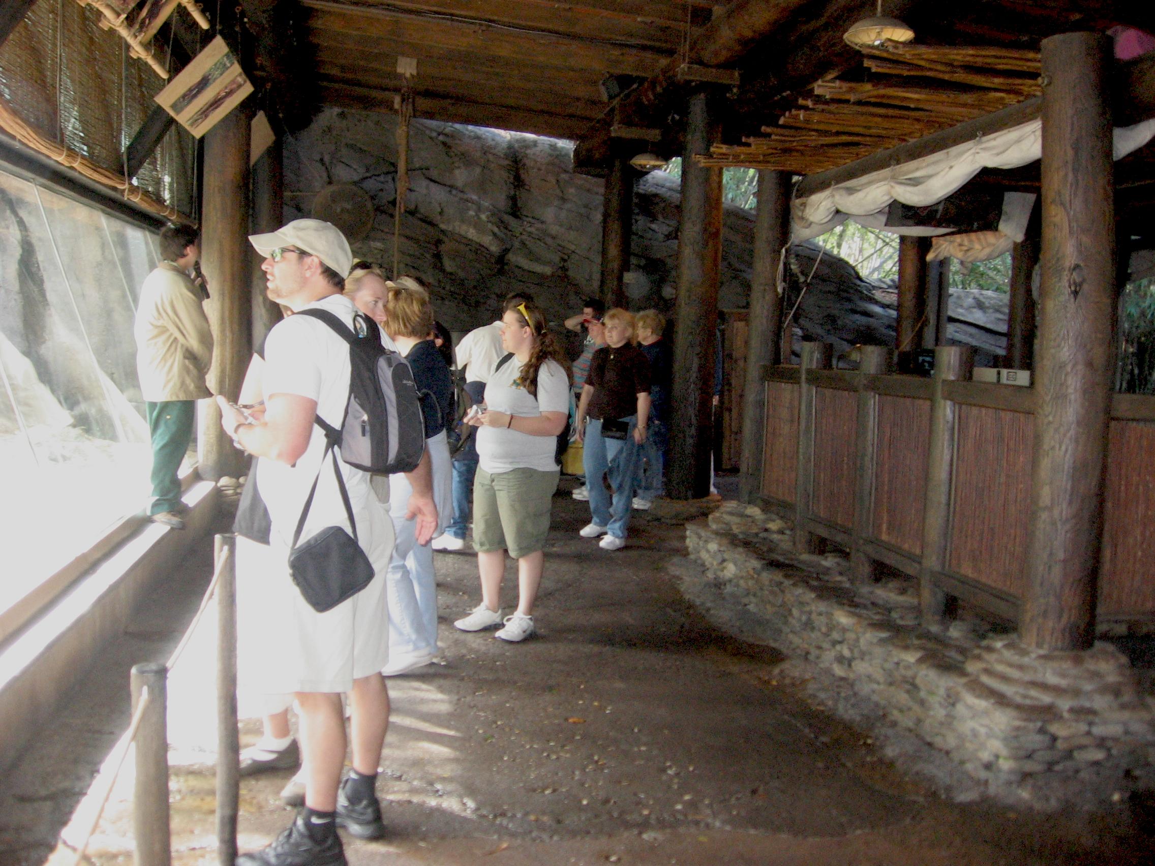 Glass observation in Gorilla Falls Disney World Animal Kingdom