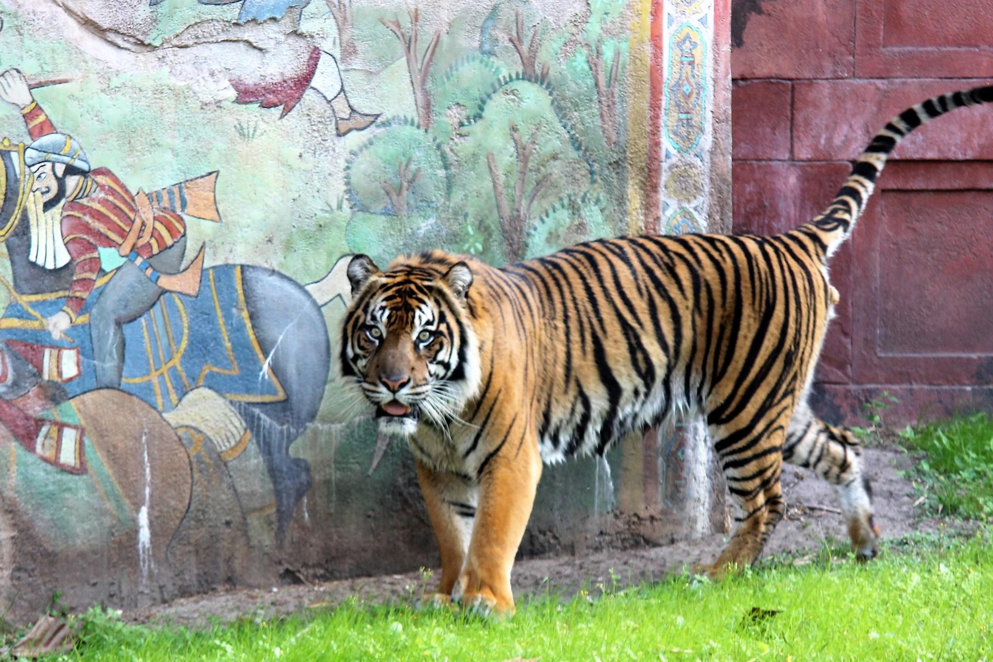 Maharaja Jungle Trek Animal