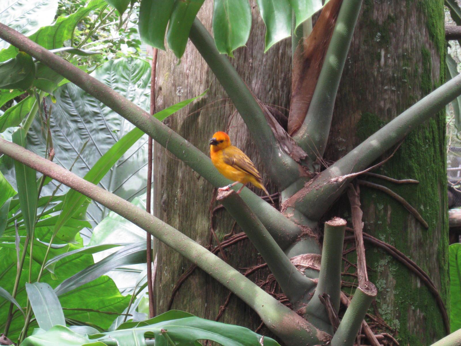 Gorilla trail bird sanctuary in Animal Kingdom Disney World