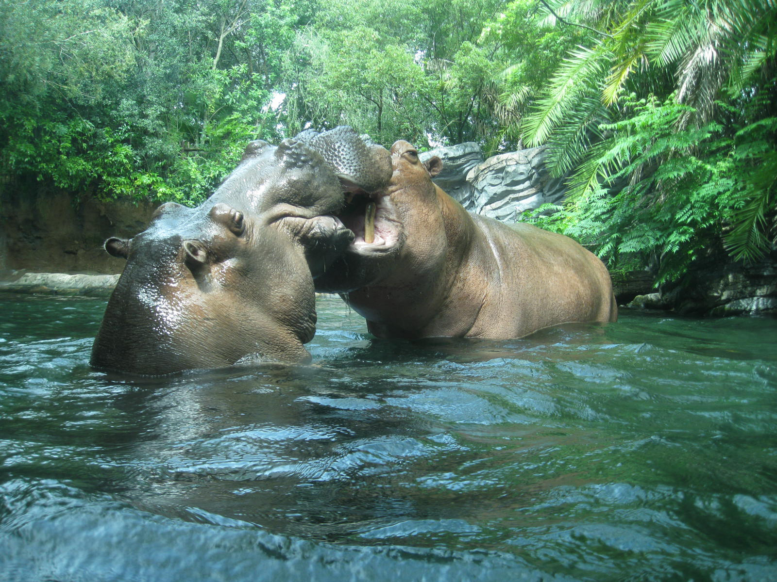 Gorilla Falls Exploration Trail rhinos