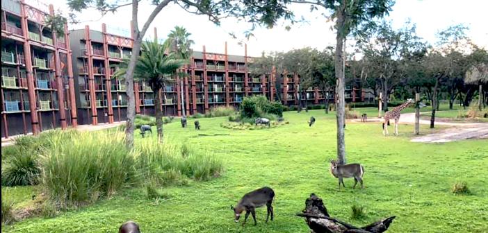 Animal Kingdom Lodge at Disney World