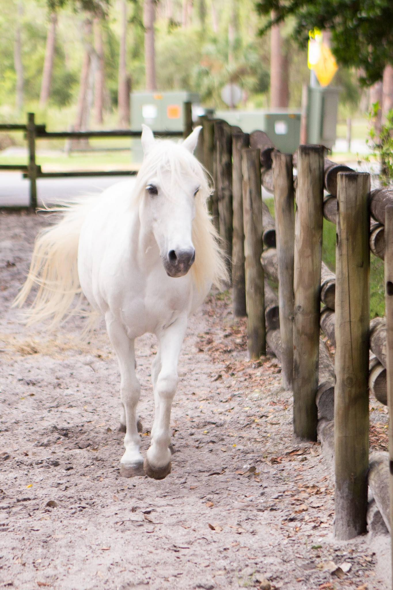 Cinderella's pony
